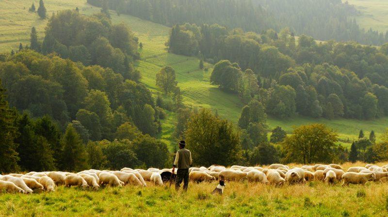 man-agriculture-farm-farmer
